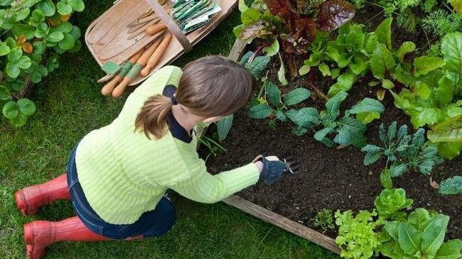 Monitor the garden for pests and diseases as you maintain it. Photo: Courtesy UC Regents