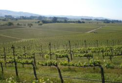 Napa County vineyards