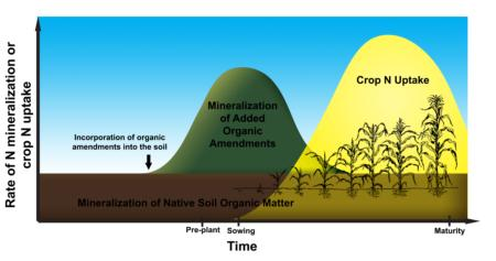 organic N mineralization