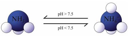 The pH dependency of ammonia/ammonium.