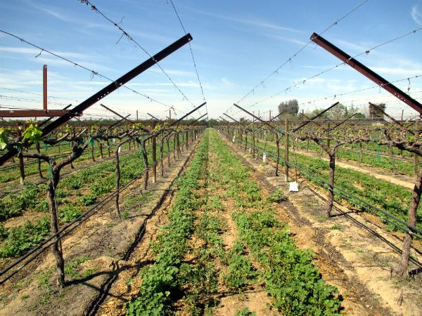 Image from Grapery Vineyard