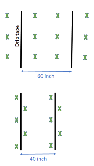 Figure: Corn planting configuration with 40 and 60 inch drip line spacing.