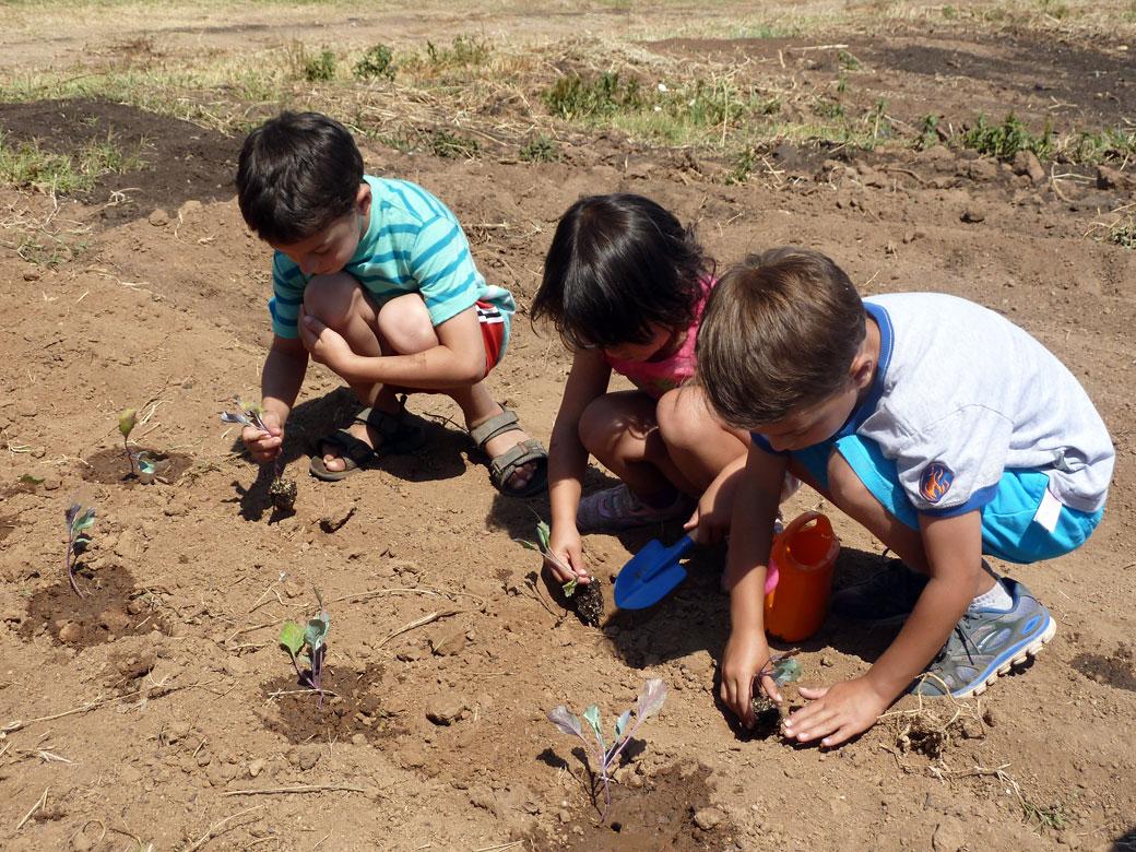 Planting vegetable starts