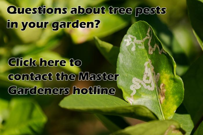 Master Gardener Tree Pest Hotline