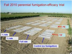 A field view of fumigant application rate and efficacy field trial conducted in Parlier, CA. Photo by Suduan Gao