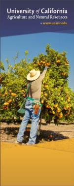 2. citrus tree BSK-90 UCANR Banners