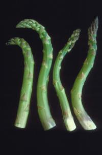 asparagus_crooked_spears