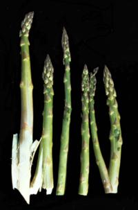 asparagus_split_spears