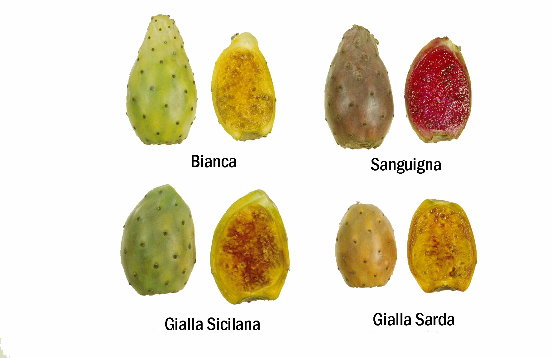 Tropical Nature: Identify your cacti here !!!!