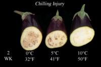 eggplant_chilling_injury2