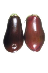 eggplant_solar_yellowing