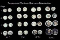 mushroom_temperature_effects