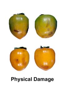 persimmons_physical_damage