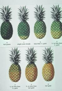 pineapple_color_chart
