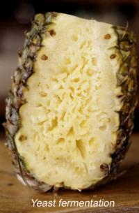 pineapple_yeast_fermentation2