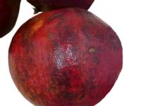 pomegranate_scald1