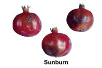 pomegranate_sunburn