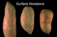 sweet_potato_surface_abrasions