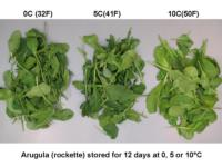 temp_effect_on_arugula960x720