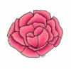 carnation019