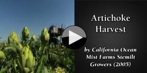 Artichoke Harvest by California Ocean Mist Farms