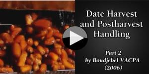 Date Harvest and Postharvest Handling part2
