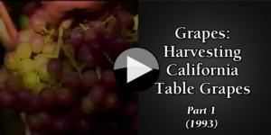 Grapes Harvesting California Table Grapes (1993) part1