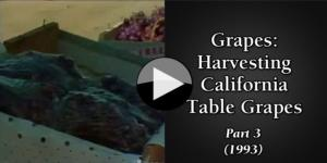 Grapes Harvesting California Table Grapes (1993) part3
