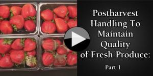Postharvest Handling To Maintain Quality of Fresh Produce part1