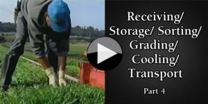 Part 4 ReceivingStorageSortingGradingCooling Transport