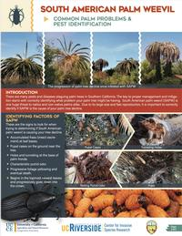 Common Palm Problems & Pest Identification