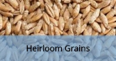 HeirloomGrains_Final