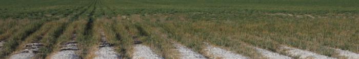 Soil surface Salinity-A