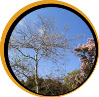 Urban dead tree circle