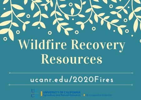 Click here for Recovery Resources page