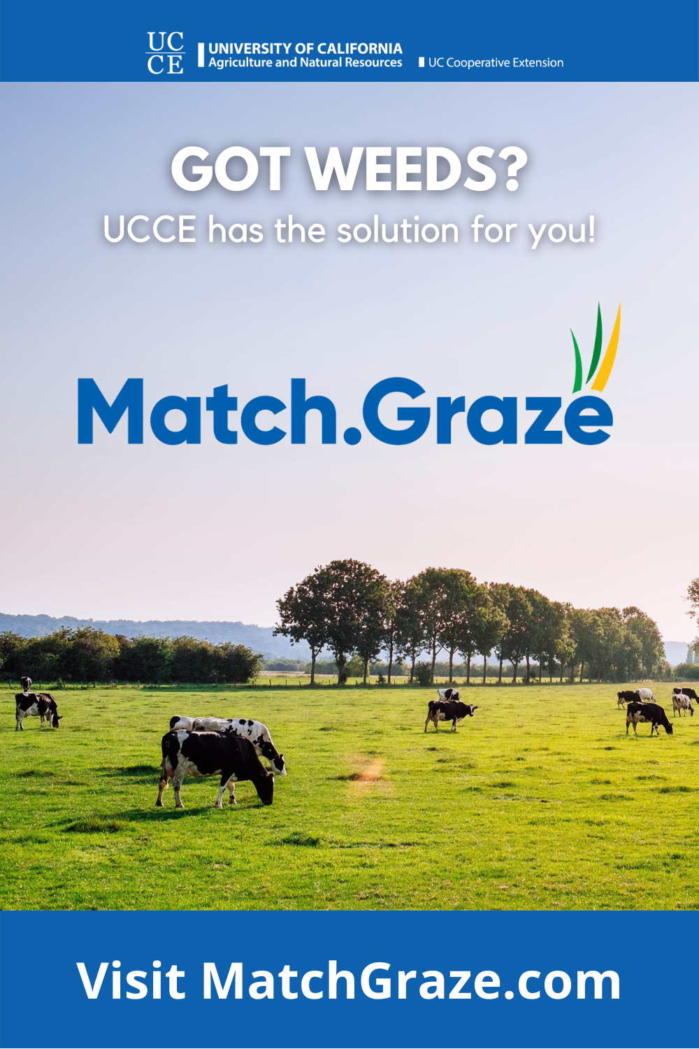 Match.Graze Pinterest