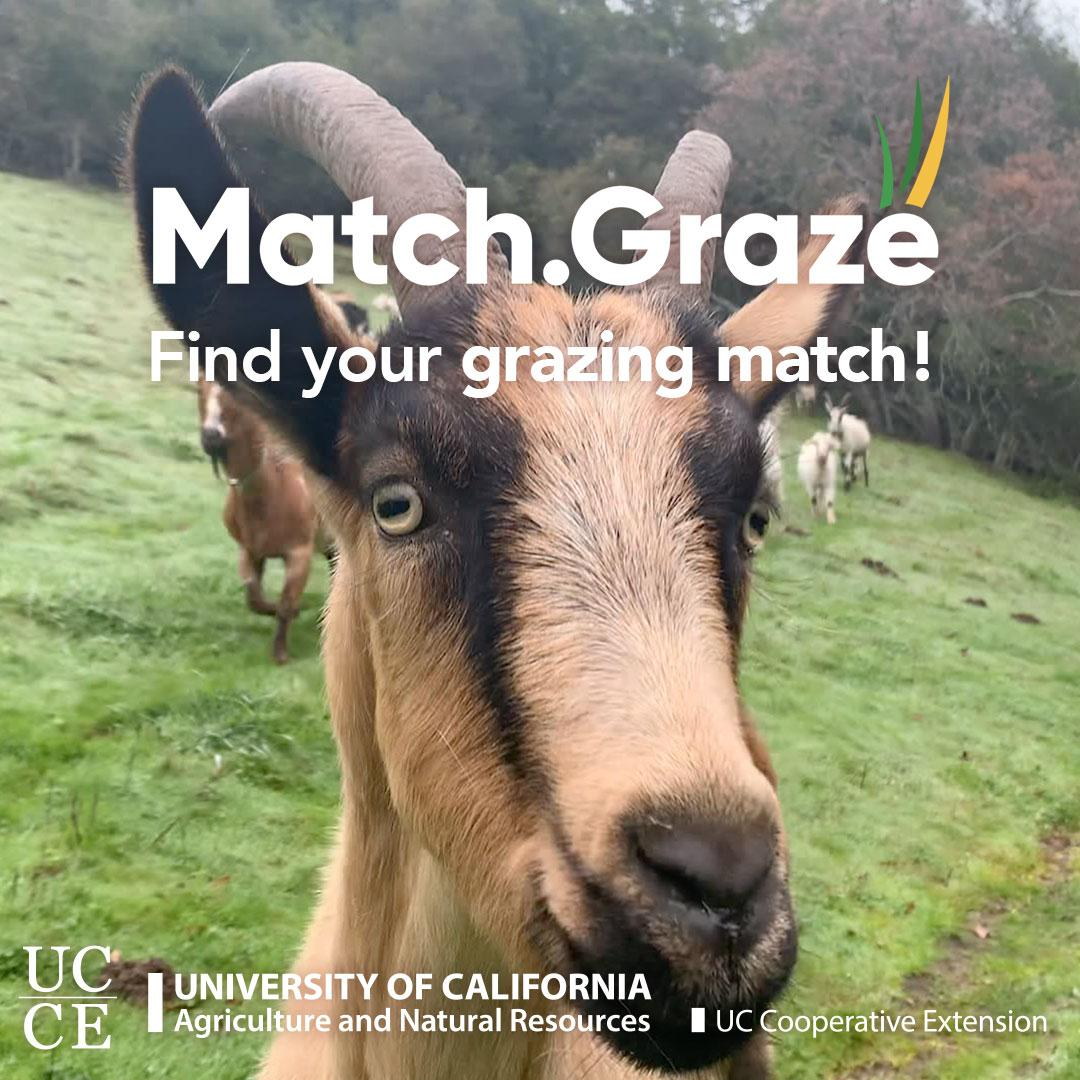 Match.Graze-CTA-TN-SQUARE-08
