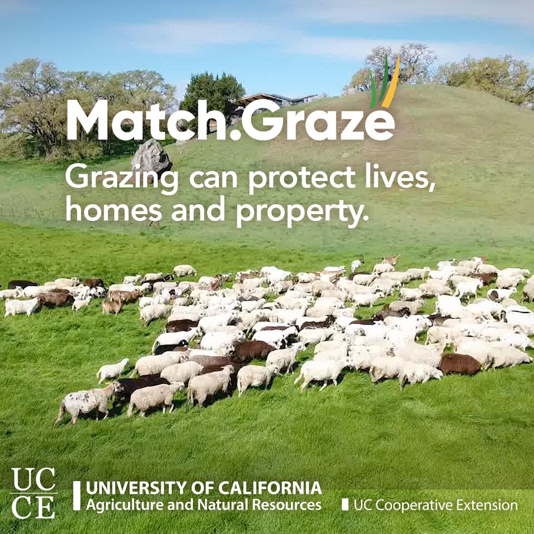 Match.Graze-CTA-TN-SQUARE-07