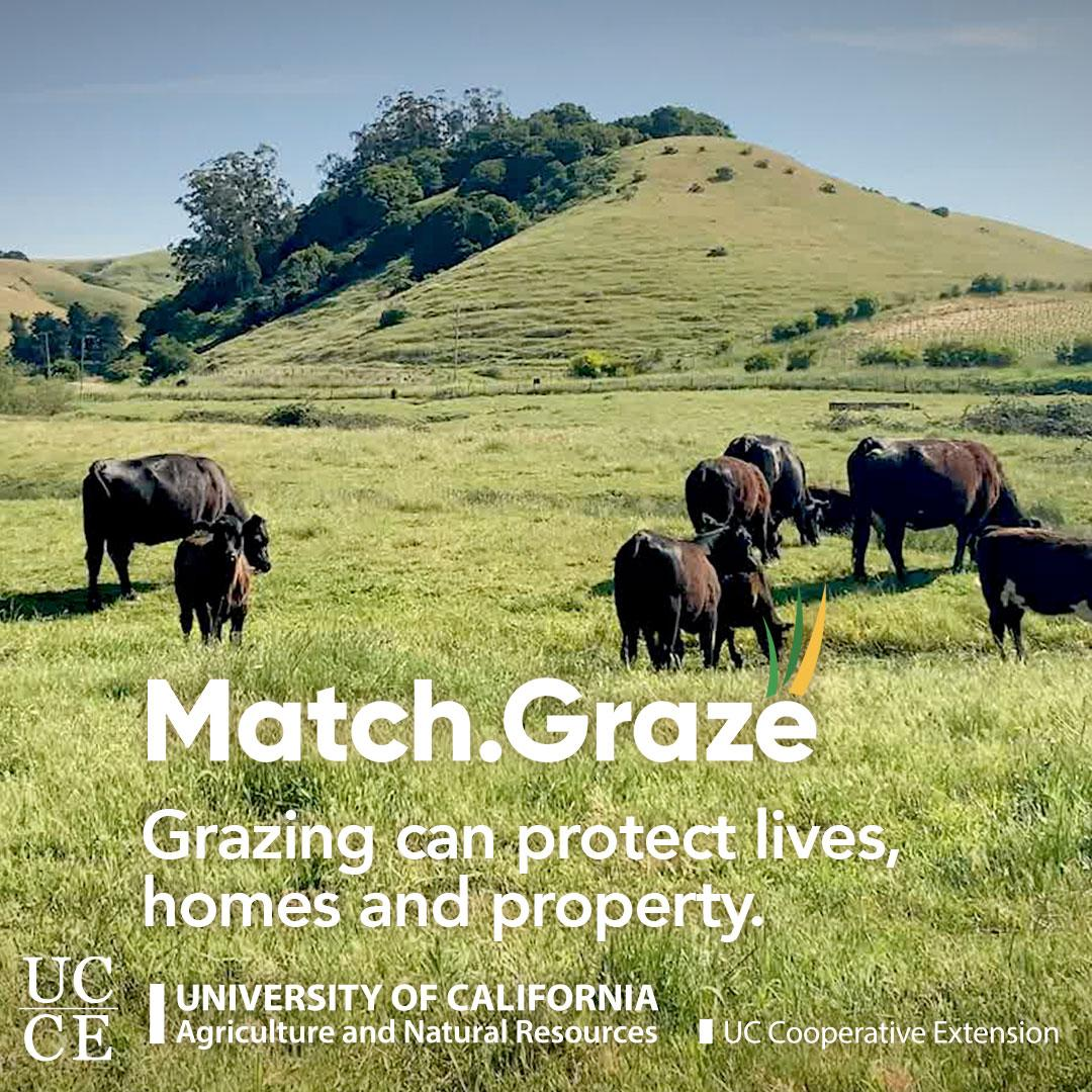 Match.Graze-CTA-TN-SQUARE-06