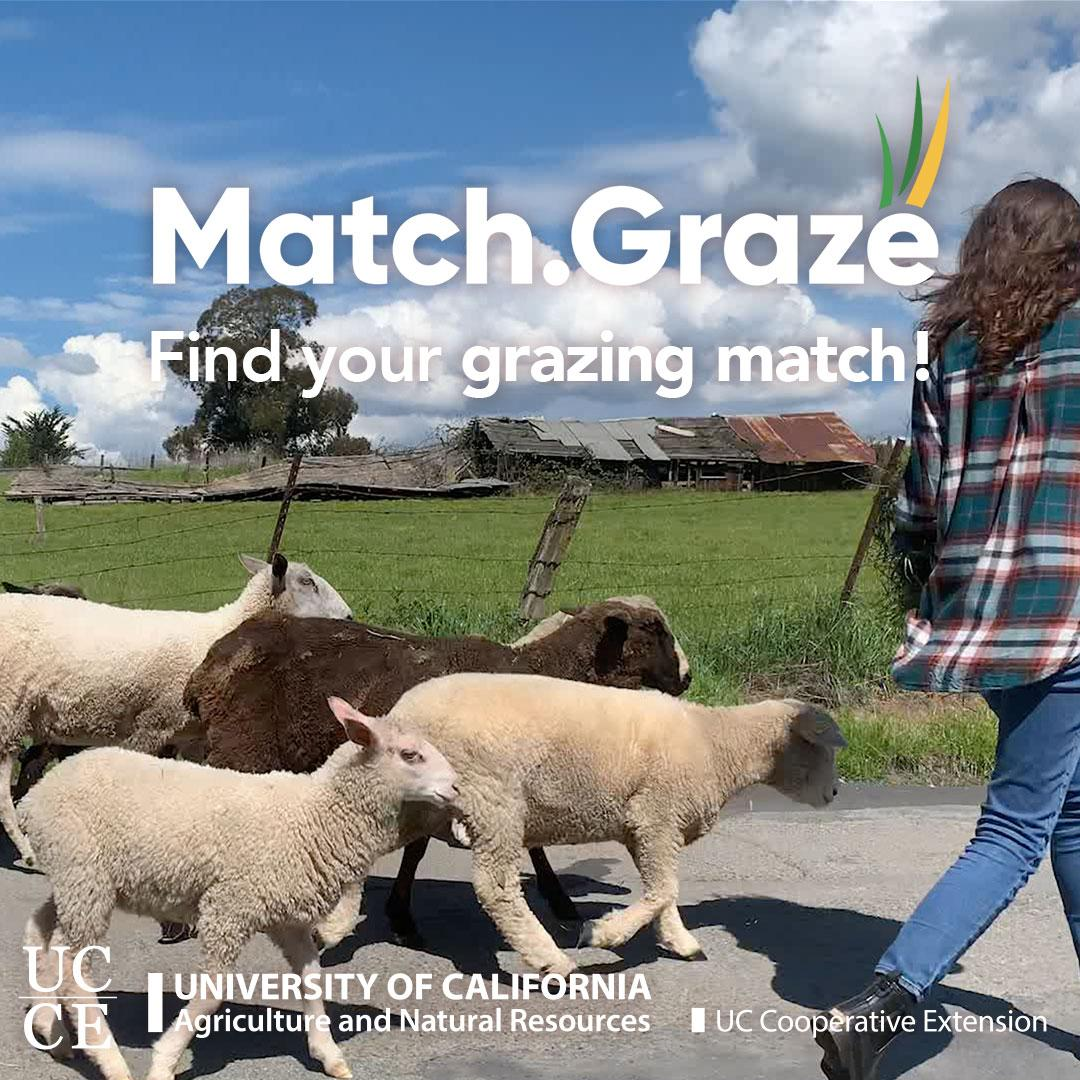 Match.Graze-CTA-TN-SQUARE-03