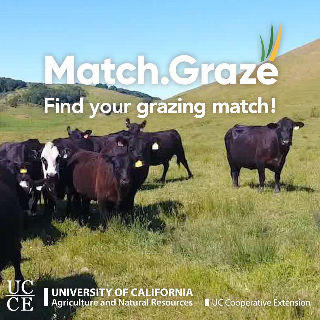 Match.Graze-CTA-TN-SQUARE-02