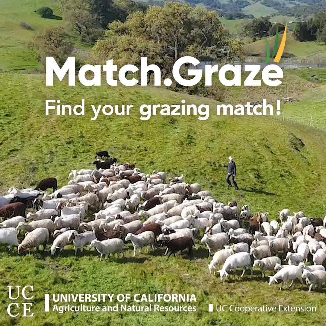 Match.Graze-CTA-TN-SQUARE-01