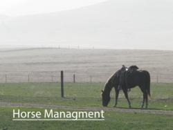 horsemanagementbutton