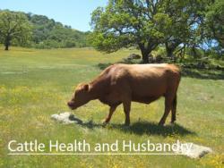 cattlehealthbutton