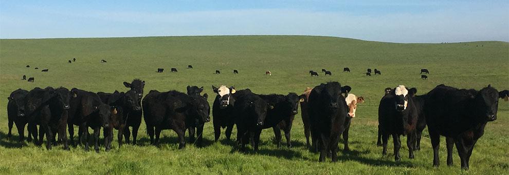 Livestock and Range