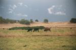 Cattle in pasture near Cow Creek, 2004. Photo by Lisa Thompson.