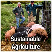 Sustainable Agriculture pict