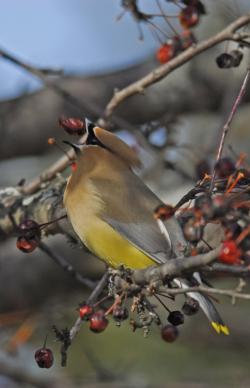 Photo from Aubobon's Christmas Bird Count