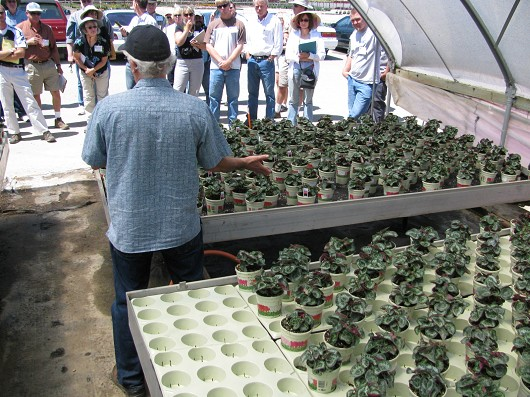 At DoRight's Nursery in Santa Paula, Richard Evans of UC Davis demonstrates a capillary mat system for reducing runoff.