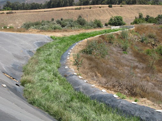 Another view of the vegetated filter strip at Bordiers Nursery, Somis.